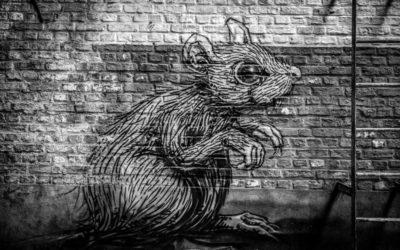 Boligen min har rotter – rask og enkel måte å få prisavslag